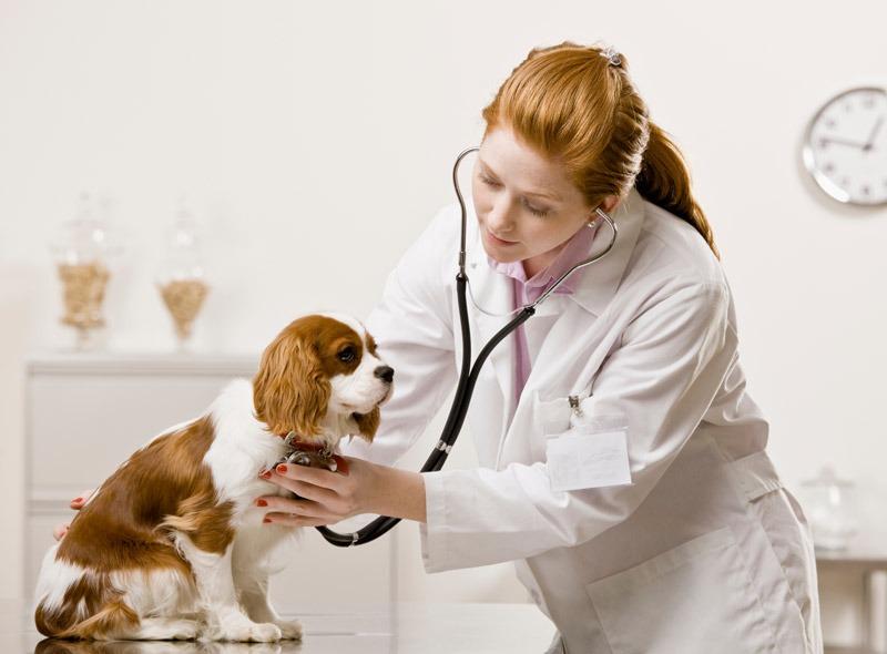 Moravia-veterinaria