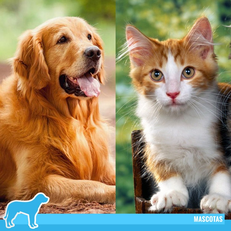 Inmosa-Inveresiones-Moravia-Segmento-Mascotas