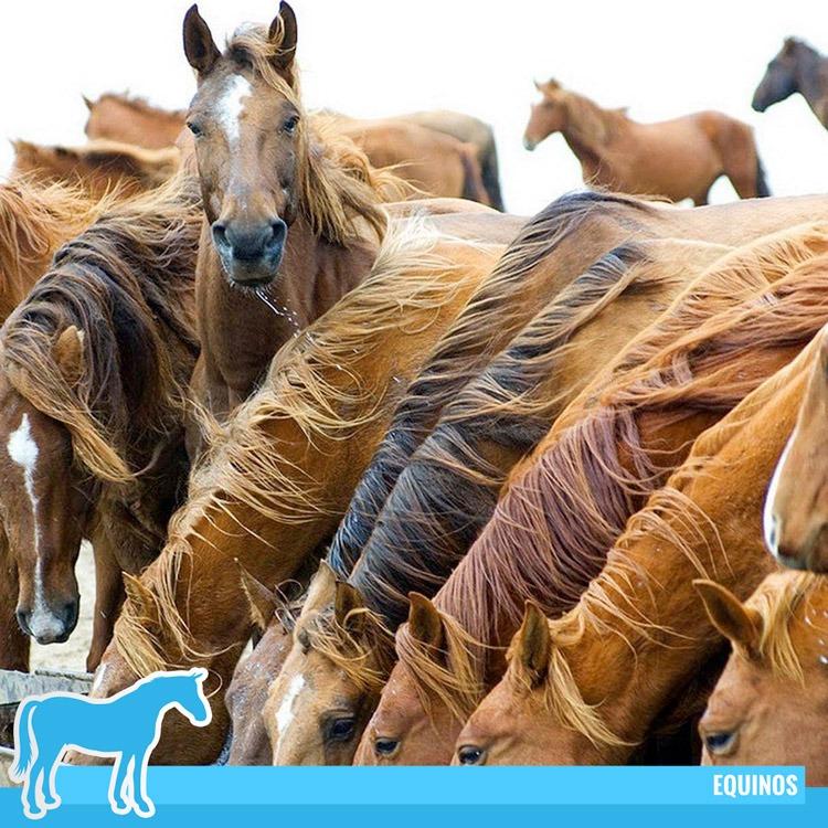 Inmosa-Inversiones-Moravia-Honduras-Productos-Veterinarios-Productos-Equinos