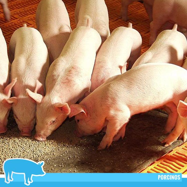 Inmosa-Inversiones-Moravia-Honduras-Productos-Veterinarios-Productos-Porcinos